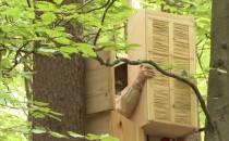 Dzikie pszczoły wracają do trójmiejskich...