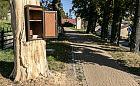 Biblioteczka w kasztanowcu ocaliła drzewo przed wycięciem