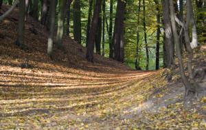 Jaka przyszłość czeka Lasy Oliwskie