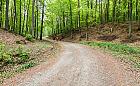 Gdańsk planuje budowę nowego szlaku spacerowego przez tereny leśne