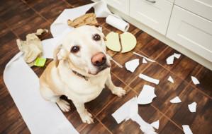 Czym zająć psa, aby w domu się nie nudził?