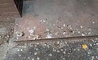 Nierówna walka z brudzącymi gołębiami