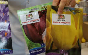 Odbierz za darmo cebulki kwiatowe