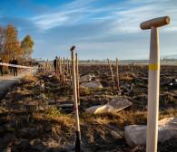 Trójmiejskie firmy posadzą las w Lipuszu