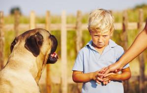 Kynofobia: trzymaj swojego psa przy sobie