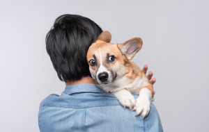 Sylwester coraz bliżej. Jak uchronić zwierzaki przed hałasem?