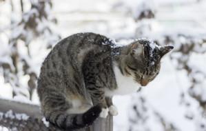 Zrób świąteczny prezent bezdomnym kotom - zbuduj im dom
