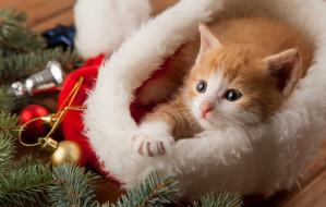 Kocie porady: spokojne święta z kotem. Na co uważać?