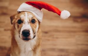 Święta ze zwierzakami to ważny czas