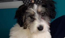 Wiele zaginionych psów po sylwestrze