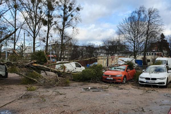 Powalone drzewa, uszkodzone auta. Bilans wichury w Trójmieście