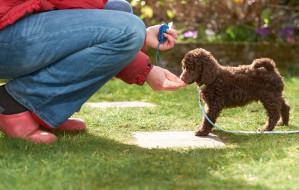 Szkolenia psów w Trójmieście. Ile to kosztuje?