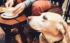 Postaw kawę dla zwierzaka na walentynki