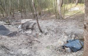 Świeże ślady nielegalnego wydobycia bursztynu na Górkach Zachodnich