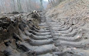 Kto uporządkuje zniszczone ścieżki leśne w Sopocie?