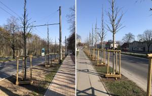 Sopot zieleni się: nowe drzewa i rośliny ozdobne