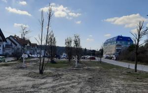 Mieszkańcy zaopiekują się drzewami w publicznym parku