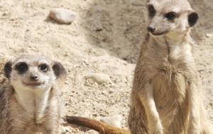 Jak pracuje zoo w czasie pandemii?