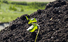 Szadółki rozdają kompost. Koszt z dowozem: 1 zł