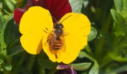 Balkon przyjazny owadom: jakie wybrać rośliny?