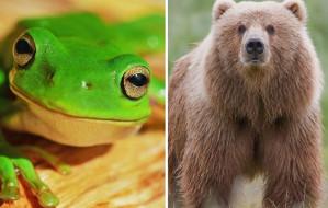 O żabach i niedźwiedziach, czyli skąd się wzięły dziwne nazwy