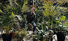 Miejska dżungla wyrosła przy Całym Gawle. Coraz więcej lokali z pięknymi roślinami