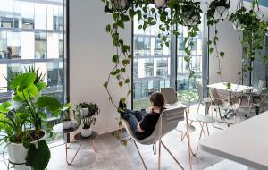 Zieleń w przestrzeni do pracy? Rośliny działają kojąco