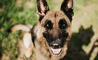 Julka: pies idealny, który nie ma swojego domu