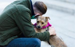 Schroniska wznawiają adopcje zwierząt