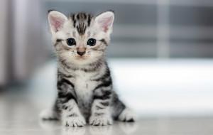Sterylizacja kotów: zapobiegaj, nie likwiduj problemu