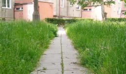 Czy służby koszą regularnie trawę?