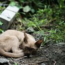 Nowy Port i Przeróbka: karma dla bezdomnych kotów za darmo