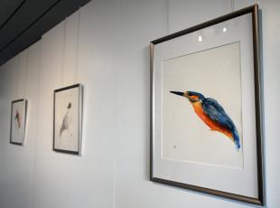 Zobacz ptaki na akwarelach bez lornetki