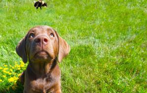 Pies użądlony przez owada. Co robić?