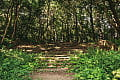 Powstaną nowe schody do parku i punktu widokowego na Aniołkach