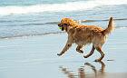 Psie plaże w Trójmieście są całoroczne