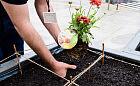 Zasadź swoją roślinę w ogródku przed Muzeum Miasta Gdyni