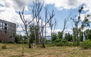 Uschnięte drzewa na atrakcyjnej działce dewelopera w Sopocie