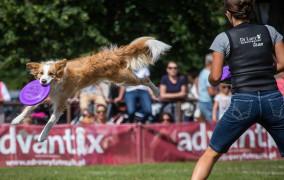 Planuj tydzień: koncerty, latające psy i imprezy plenerowe
