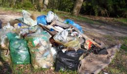 Ministerstwo wypowiada wojnę śmiecącym w lasach. Zaostrzenie kar
