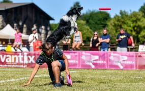 Latające Psy. Zobacz widowiskowe zawody dogfrisbee
