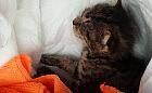 Pracownicy Zakładu Utylizacyjnego uratowali małego kota wyrzuconego na śmietnik