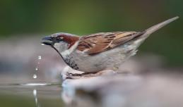 Wystaw wodę, pomóż ptakom przetrwać upały
