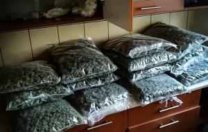 Narkotyki za 6 mln zł nie wejdą na rynek