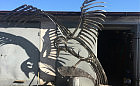 Mewa wyląduje na środku ronda. Nowa instalacja artystyczna w Sopocie