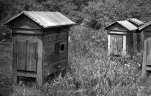Pszczoły, kronprinc i wybory. Problemy z 1935 r.