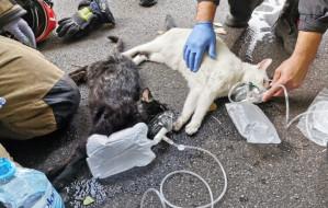 Gdynia: straż pożarna uratowała koty z płonącego mieszkania