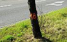 Wycinka 20 martwych drzew przy Marynarki Polskiej