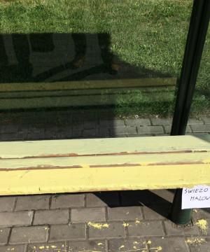 Pomalował ławki... farbą olejną