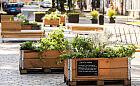 Miejska farma - dużo więcej ziół dla mieszkańców